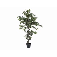 Ficus Forest Tree, 110cm