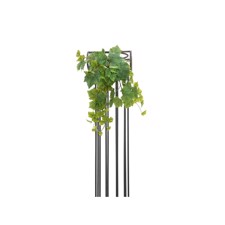 Grape Bush, Premium, 50cm