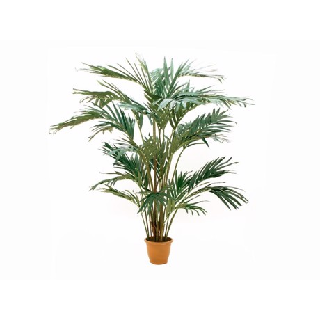 Now available! EUROPALMS